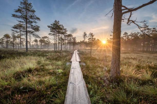 핀란드의 가을 아침에 나무 길과 멋진 일출이있는 늪에서 바라보는 경치 - 핀란드 뉴스 사진 이미지