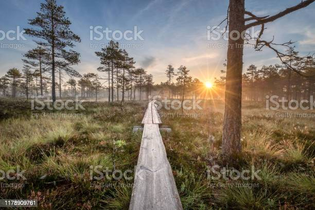 Photo of Scenic view from swamp with wooden path and beuatiful sunrise at autumn morning in Finland