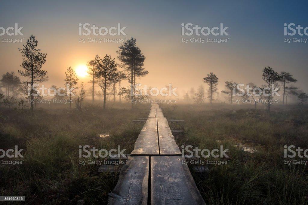 Panoramablick vom Sumpf mit hölzernen Pfad am Herbstmorgen im Nationalpark Torronsuo, Finnland – Foto