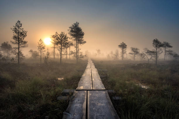 Scenic view from swamp with wooden path at autumn morning in Torronsuo National park, Finland stock photo