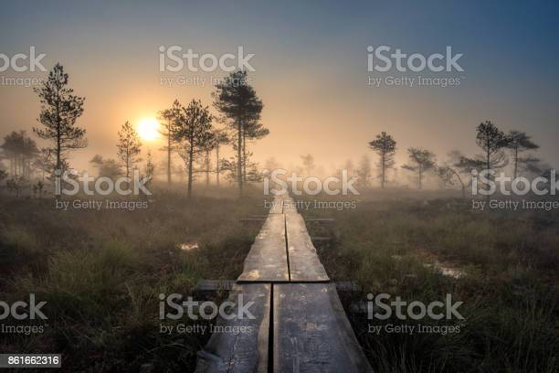 Photo of Scenic view from swamp with wooden path at autumn morning in Torronsuo National park, Finland