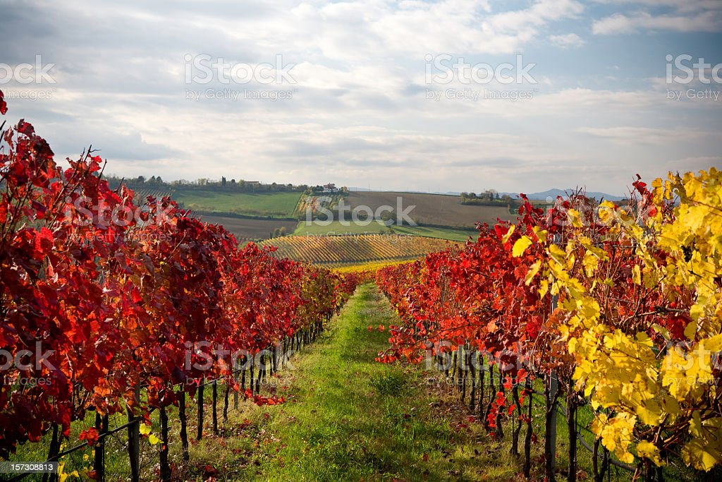 Scenic view of colorful fields during autumn royalty-free stock photo