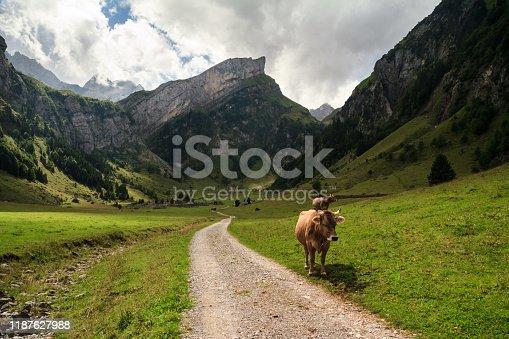 Mountain peak behind him