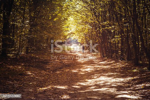 A scenic view of a dirt road covered in autumn leaves with diminishing perspective surrounded by the forest.