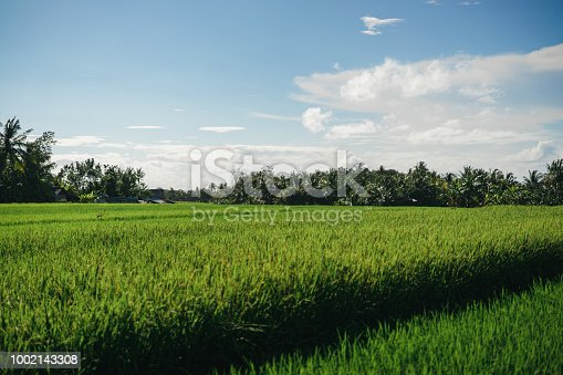 istock scenic view of field with green grass and blue cloudy sky in ubud, bali, indonesia 1002143308