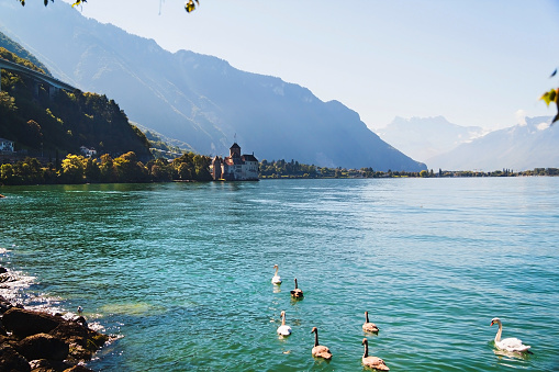 Scenic view of Geneva lake with swans and Chillion castle among mountains  in Switzerland