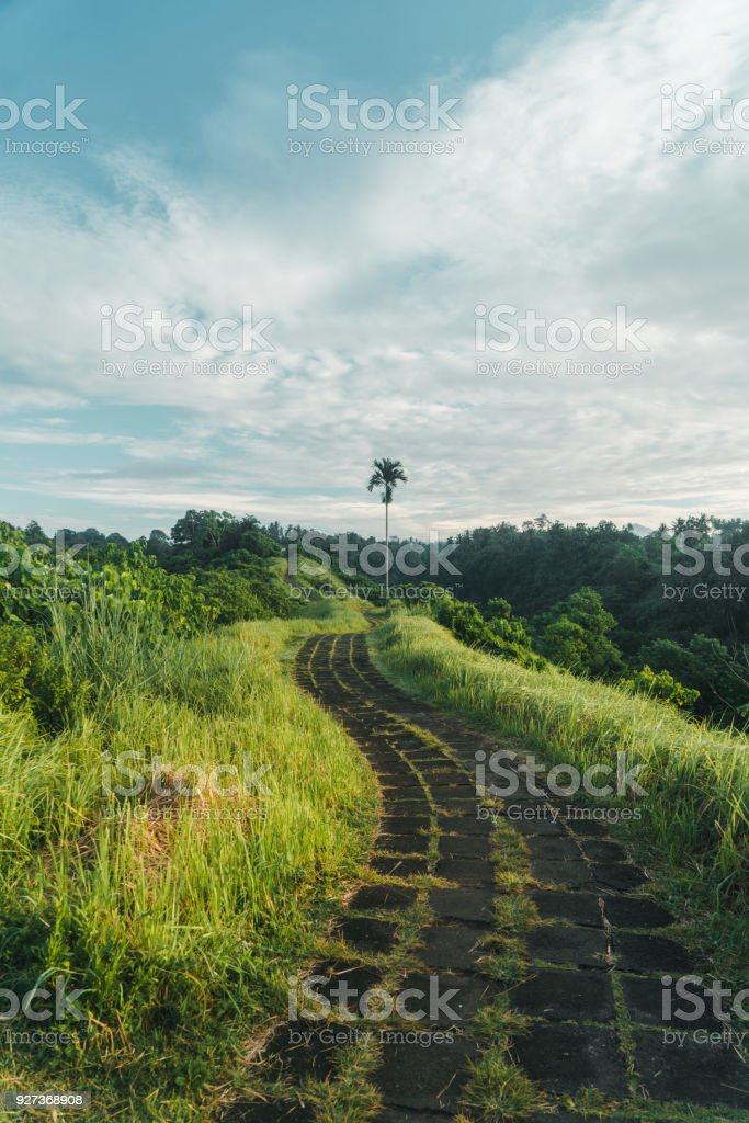Scenic view of green hill  in Bali - Royalty-free Agricultural Field Stock Photo