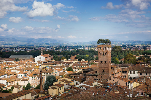 istock Scenic view of Guinigi Tower with garden on the top from above. Location Lucca, Tuscany, Italy. Picturesque travel postcard. 995119566