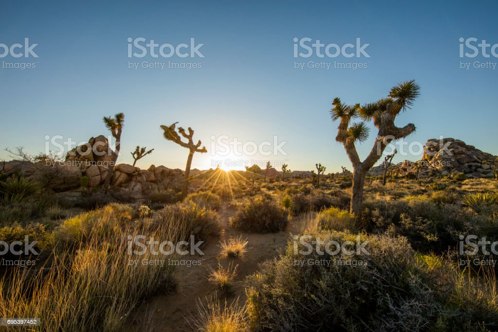 Scenic view of hiking footpath amidst plants stock photo