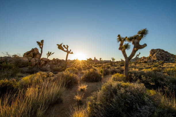 Scenic view of hiking footpath amidst plants Scenic view of semi-arid landscape against sky. Hiking footpath amidst plants and trees growing in desert. Idyllic view of natural landmark during sunset. amidst stock pictures, royalty-free photos & images