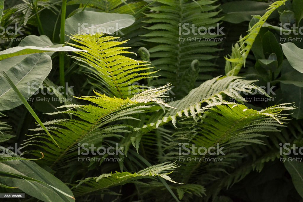 Scenic view of jungle with ferns stock photo