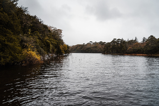 Herrliche Sicht Auf See In Killarney Ein Nebliger Tag Stockfoto und mehr Bilder von Baum