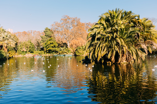 scenic view of lake with lush palm trees in parc de la ciutadella, barcelona, spain