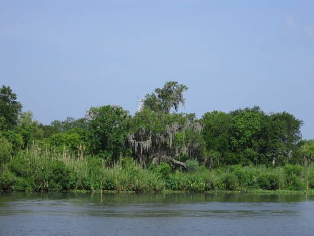 Scenic view of Mississippi Swamp stock photo