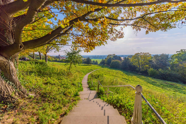 scenic view of richmond park walking path - richmond park stock photos and pictures