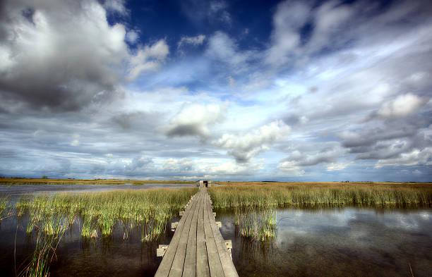 Scenic view of Saskatchewan marshes stock photo