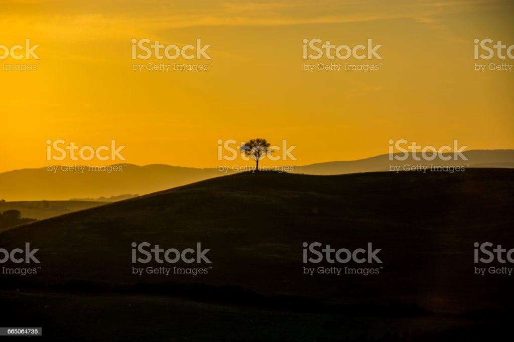 Scenic view of single tree on hill during sunset stock photo