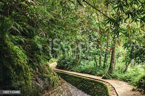 istock scenic view of stream in green forest in ubud, bali, indonesia 1002143460