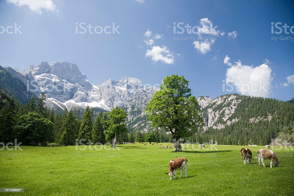 Scenic view of the Austrian Alps royalty-free stock photo