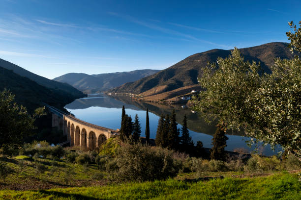 Scenic view of the Douro River with terraced vineyards near the village of Foz Coa stock photo