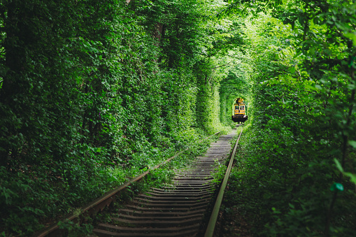 Dramatic view of the train riding through the majestic green tunnel in the forest in Ukraine