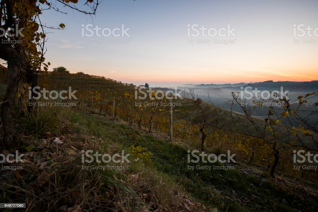 Scenic view of vineyard during autumn stock photo