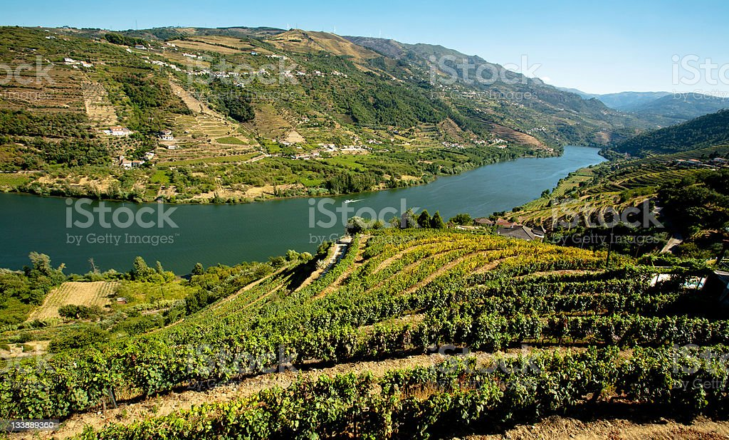 A scenic view of vineyards in the Douro region stock photo