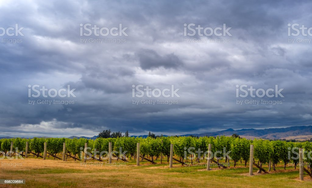 Scenic view of vineyards with dramatic sky, Marlborough, NZ stock photo