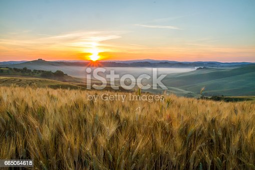 Scenic view of wheat crops in fields against sky. Beautiful view of rolling landscape during sunset. Idyllic view of nature in Italy.