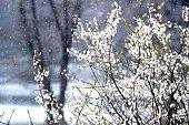 Snow in April, Scandinavia