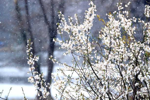Scenic view of white flowers and snowflakes stock photo