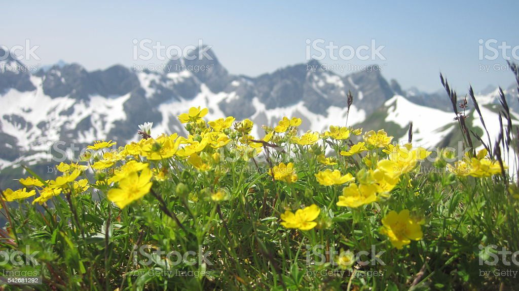 Scenic view on alpine mountain range with flowers in foreground - Lizenzfrei Allgäu Stock-Foto