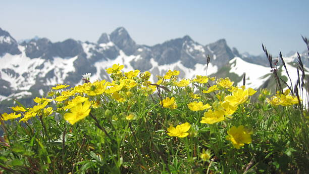 Scenic view on alpine mountain range with flowers in foreground – Foto