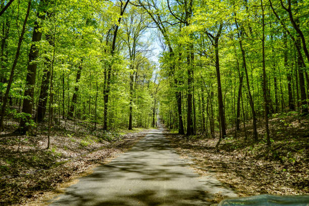 Scenic View on Road Trip Through the Forest stock photo