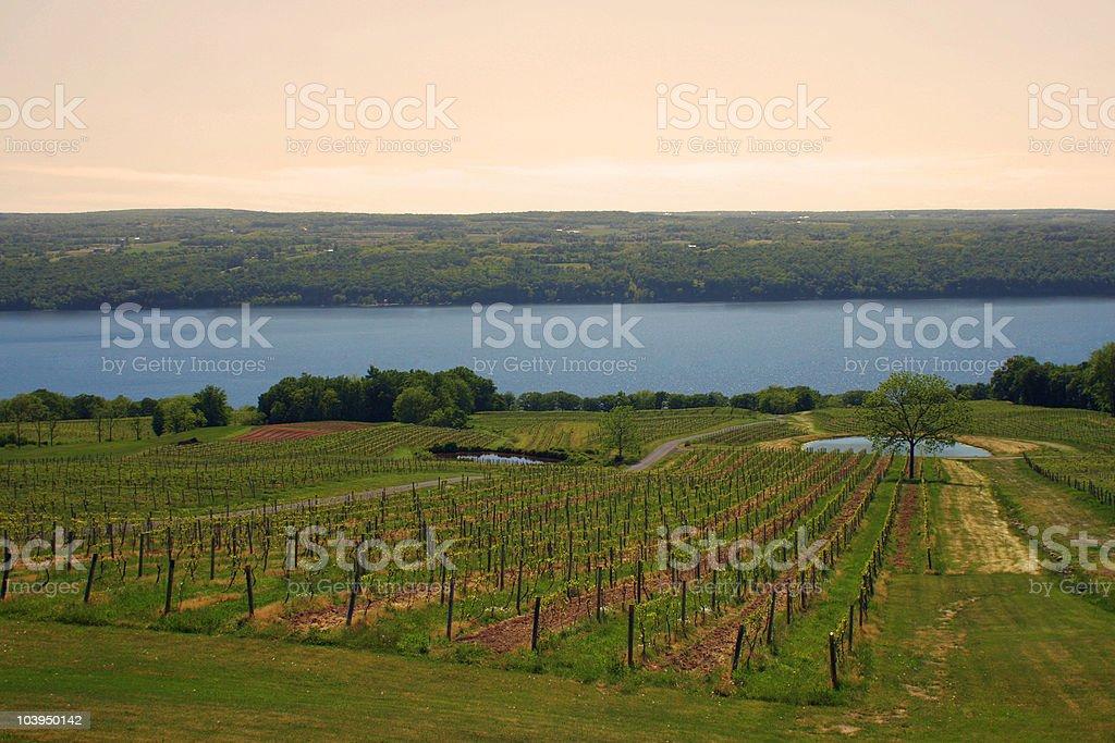 Scenic Vineyard - Seneca Lake Wine Trail, New York stock photo