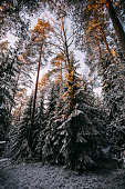 Scenic winter landscape with forest, sunset in Finland