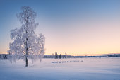 Scenic winter landscape with lonely scow covered tree and sunrise at morning time in Finland.
