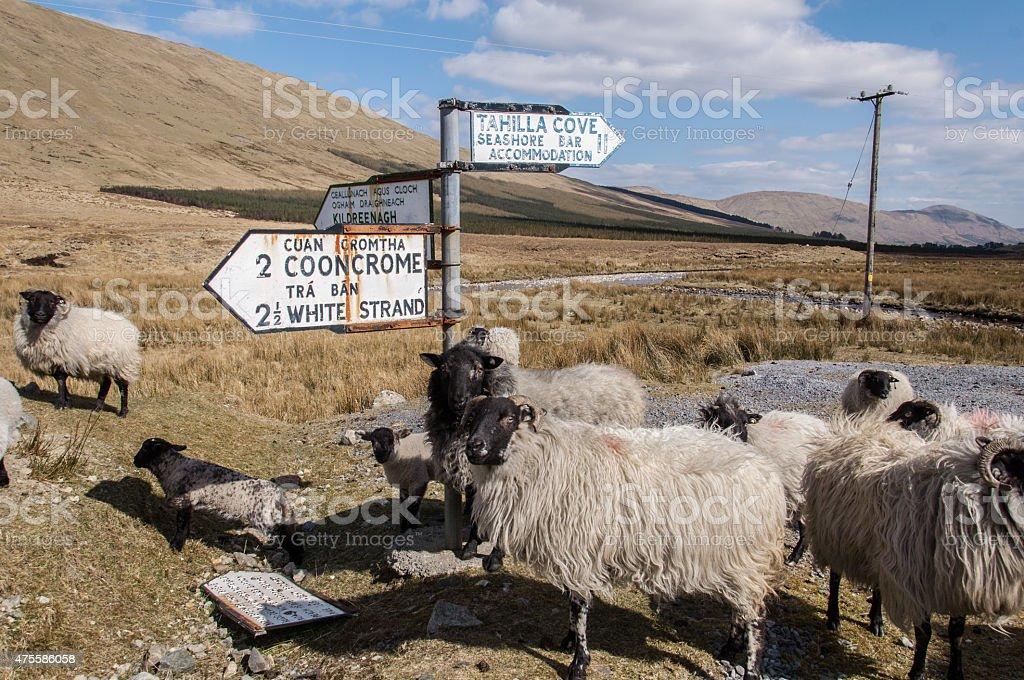 Schaf und Wegweiser stock photo