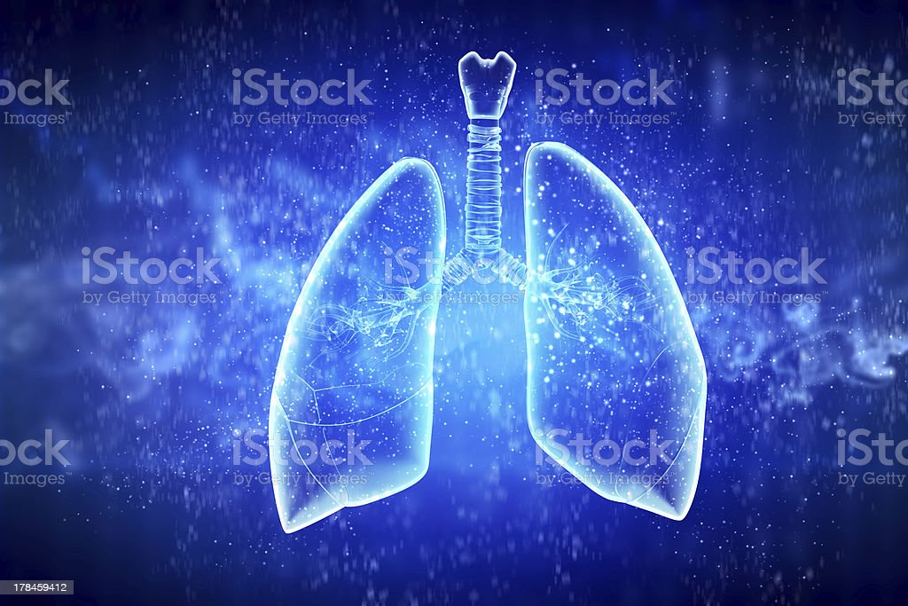 Schematic illustration of human lungs stock photo