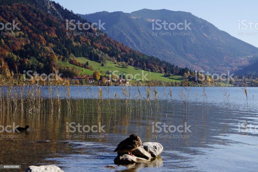 Schilfgras am Seeufer stock photo