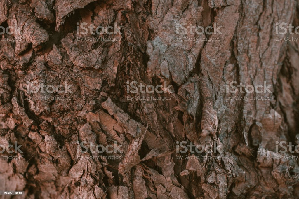 Schinus molle bark texture. California Pepper tree bark. Peruvian pepper. Abstract texture and background from Schunis molle tree bark. Macro view of pepper tree bark texture. royalty-free stock photo