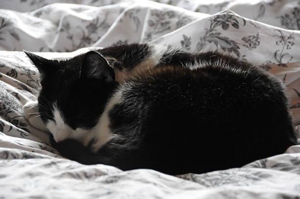 Schlafende chipmunk – Foto