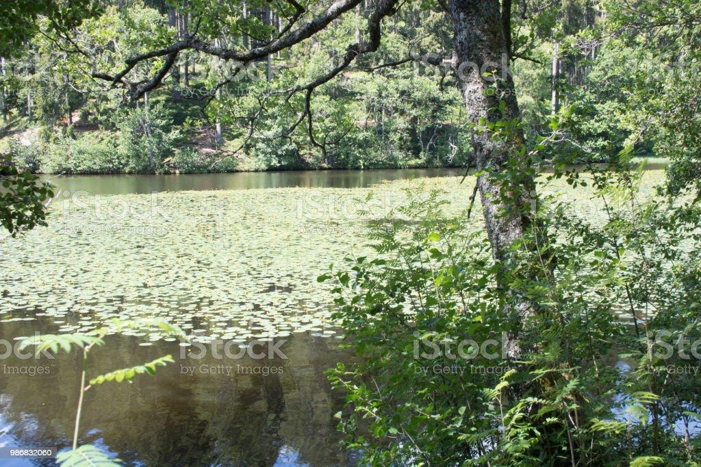 Schlüchtsee im Hochschwarzwald stock photo