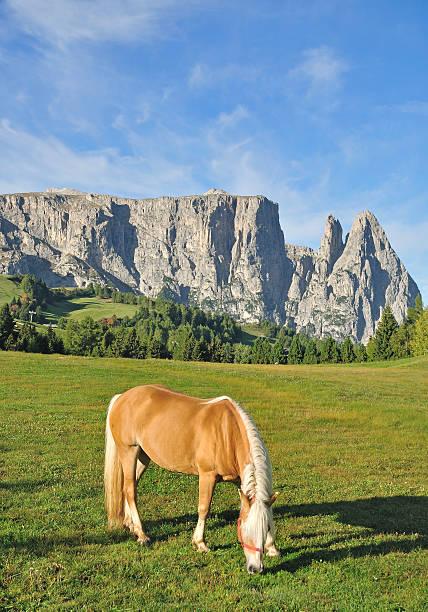 schlern mountain, dolomiten, italien - seiser alm stock-fotos und bilder