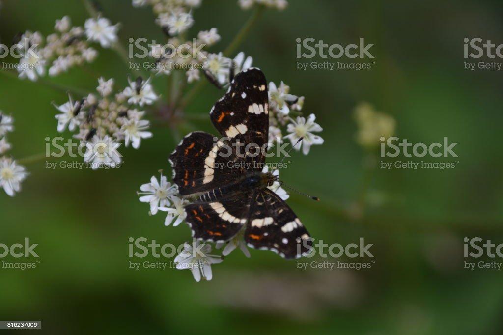 Schmetterling stock photo