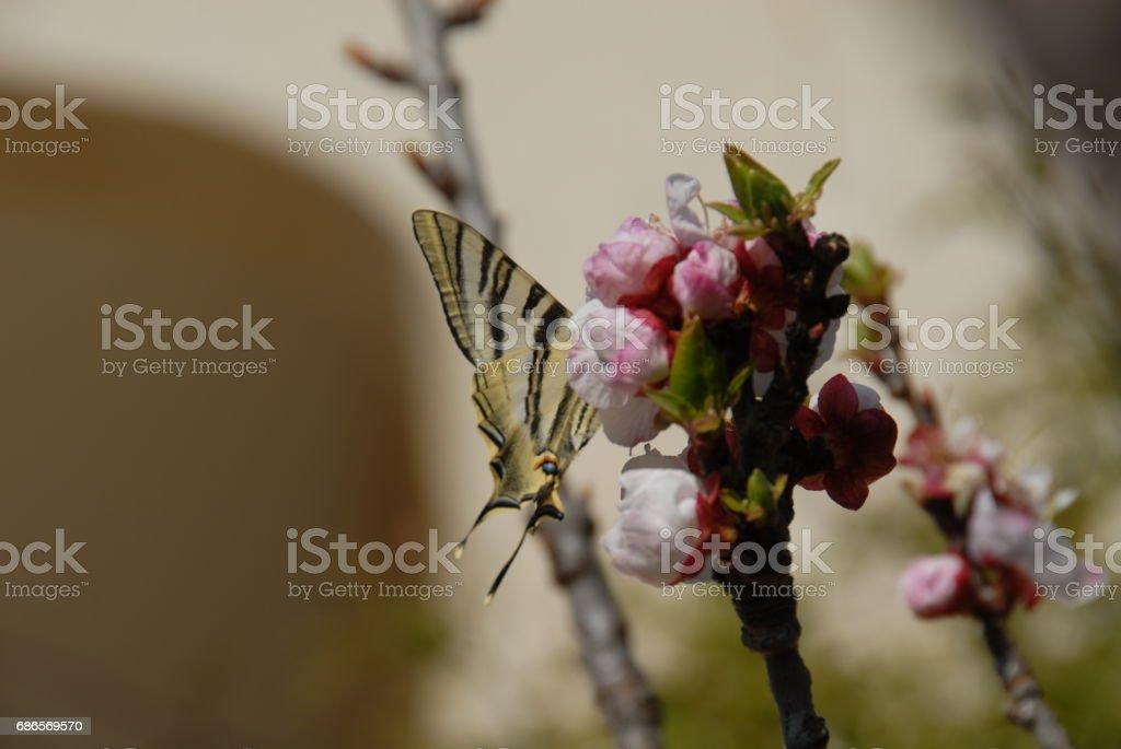 Schmetterling - Spanien royalty-free stock photo