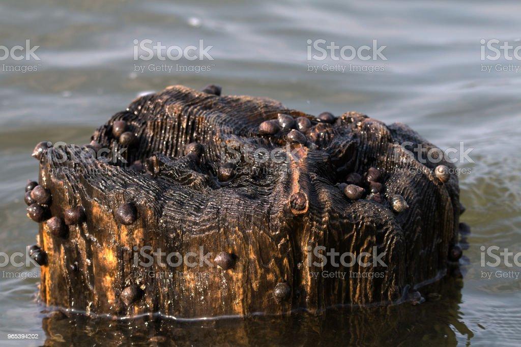 Schnecken auf einen Holzpflock royalty-free stock photo