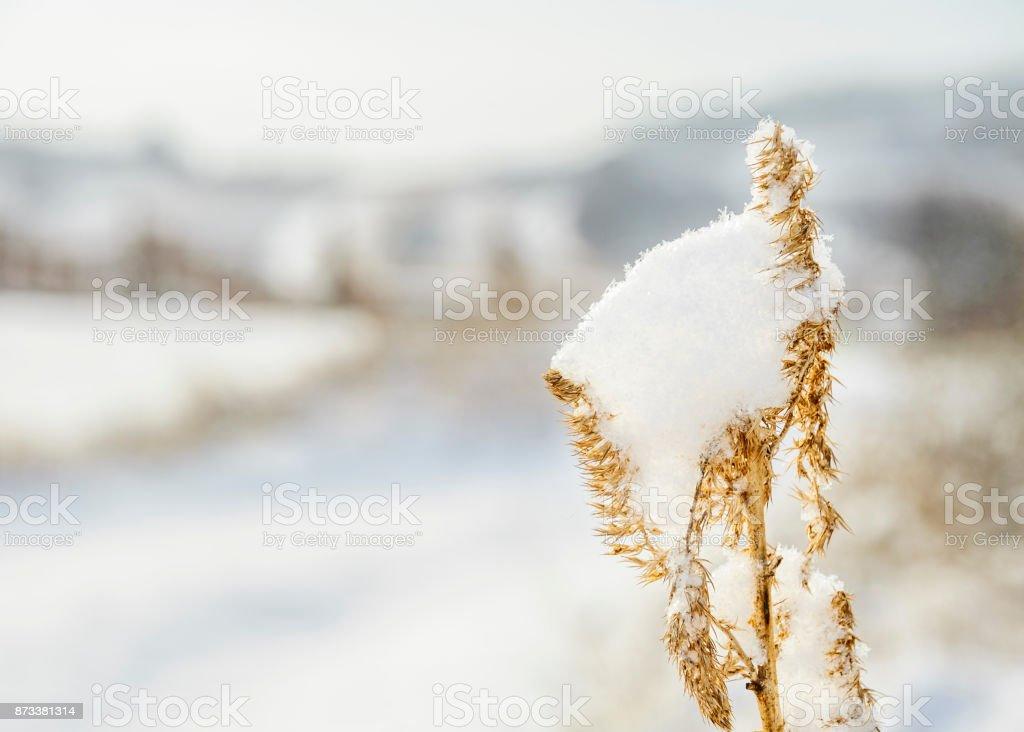 Schnee Auf Gras Im Winter – Foto