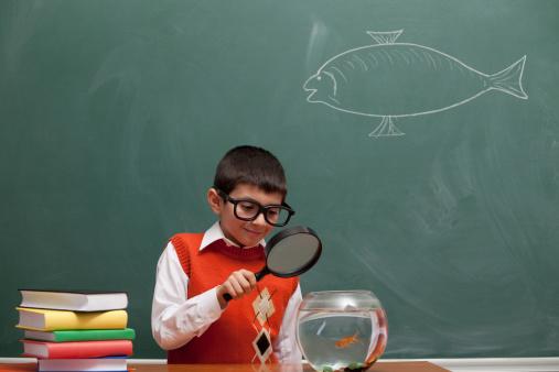 School Boy Looking Fish In Aquarium Stock Photo - Download Image Now