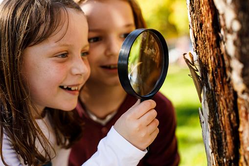School children exploring insects
